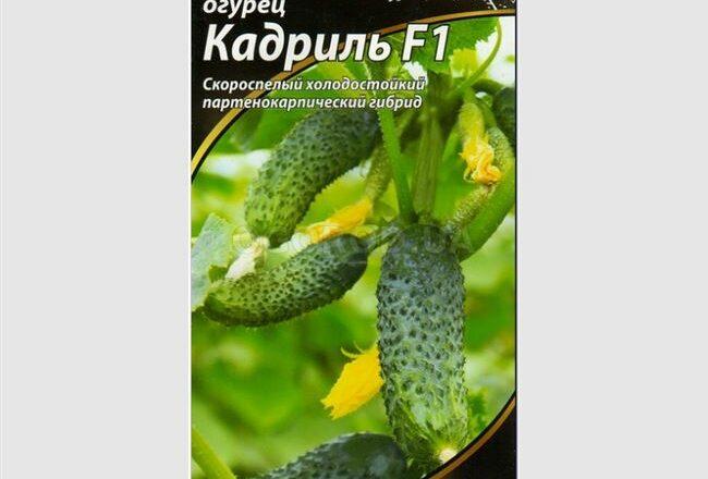 Описание огурцов Кадриль f1 и правила выращивания сорта
