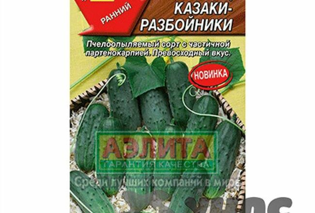 Казаки-Разбойники - сорт растения Огурец