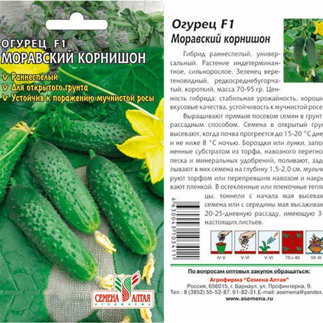 Огурец «Моравский корнишон f1»: правила посадки, выращивания и ухода