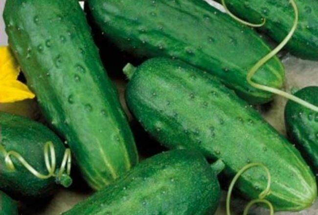 Огурец Закусочный: подробное описание урожайного сорта