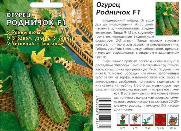 Среднеранний самоопыляемый огурец «Патти»: секреты агротехники и отзывы об урожае