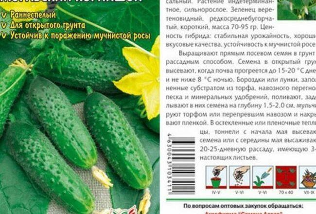 Хрустящие корнишоны без горчинки — огурец Русский стиль f1: полное описание