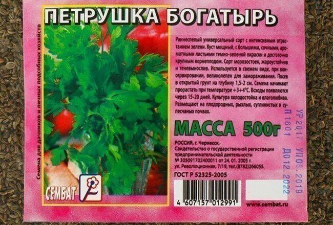 Описание, характеристика и фото листовой петрушки Богатырь. Особенности выращивания сорта