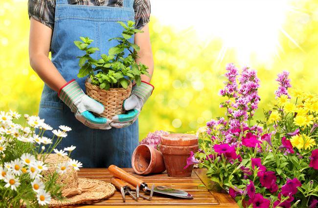 Сайт о садоводстве