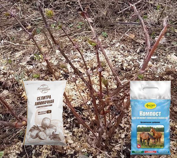 Чем лучше подкормить жимолость весной, летом и осенью: как и сколько вносить удобрений