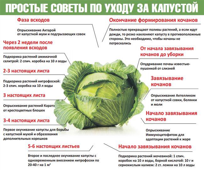 Когда, как и чем подкормить капусту
