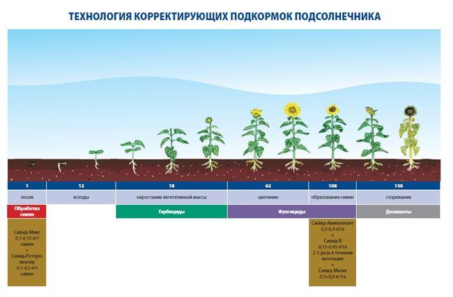 С какими удобрениями лучше всего сеять подсолнечник?