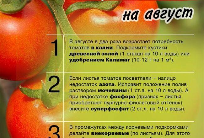 Чем подкармливать помидоры: способы повышения урожайности